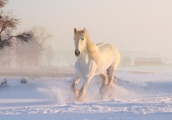 obozy jeździeckie zimowe